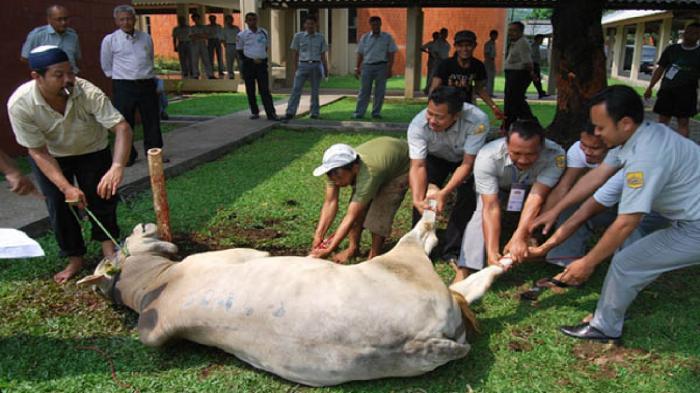 Hari Raya Idul Adha Beda Indonesia Beda dengan Saudi, Menag: Gak Usah Dibesar-besarkan