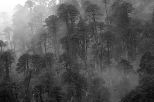 nw-bhutan-forest